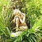 The Buddha at Lantern Cottage in Glastonbury
